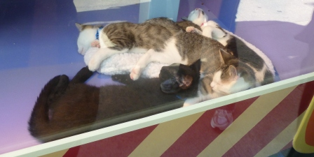 SF 12 kitty pile
